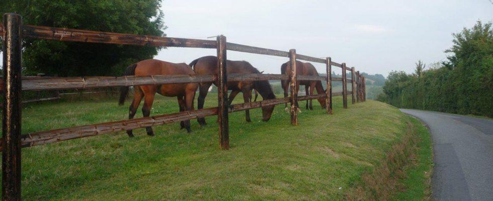 abris pour chevaux