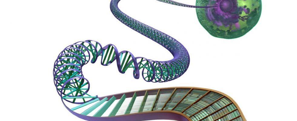 Limites des tests d'ADN